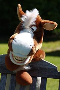 team-jimmy-das-pferd